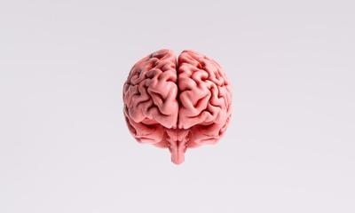 В мозге нашли два новых типа клеток с неизвестной функцией