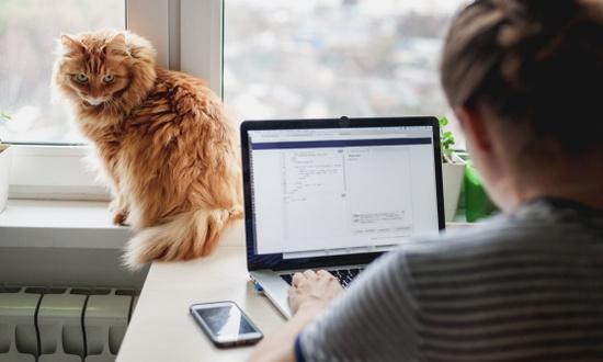 Московские колледжи с понедельника работают в онлайн-режиме